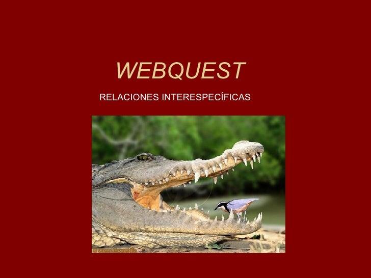 WEBQUESTRELACIONES INTERESPECÍFICAS