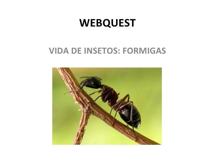 WEBQUEST VIDA DE INSETOS: FORMIGAS