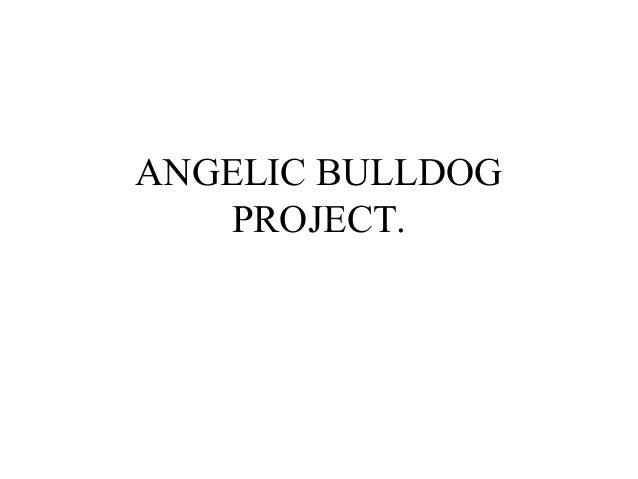 ANGELIC BULLDOG PROJECT.