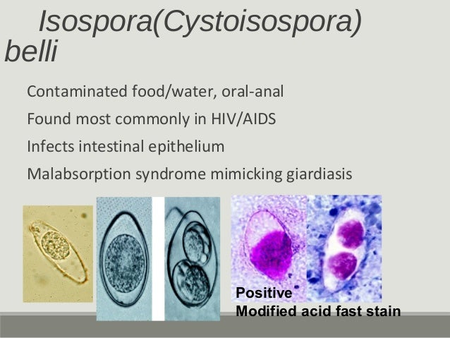 Isospora(Cystoisospora) belli Contaminated food/water, oral-anal Found most commonly in HIV/AIDS Infects intestinal epithe...