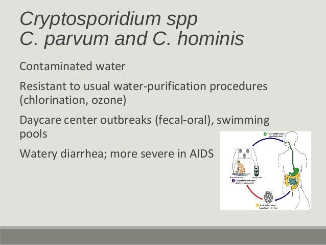 Cryptosporidium spp C. parvum and C. hominis Contaminated water Resistant to usual water-purification procedures (chlorina...