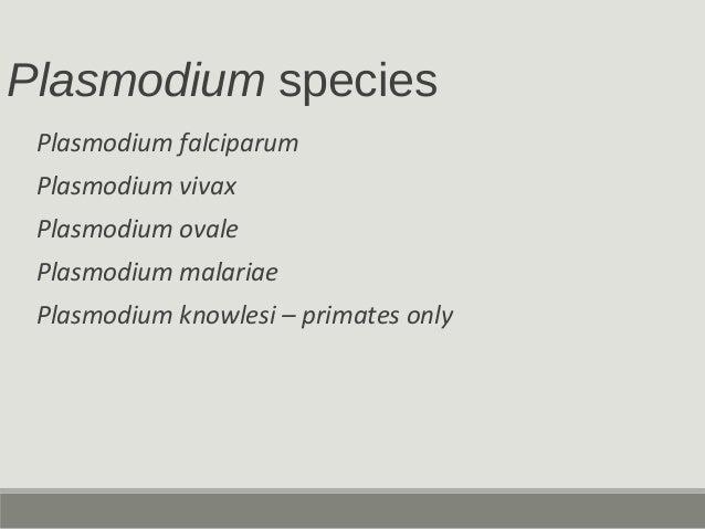 Plasmodium species Plasmodium falciparum Plasmodium vivax Plasmodium ovale Plasmodium malariae Plasmodium knowlesi – prima...