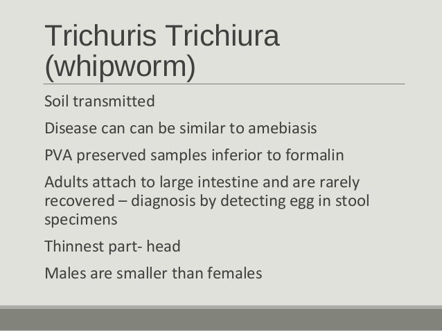 Trichinella spiralis -Tissue nematode -All stages occur in single host -usually an incidental finding in muscle