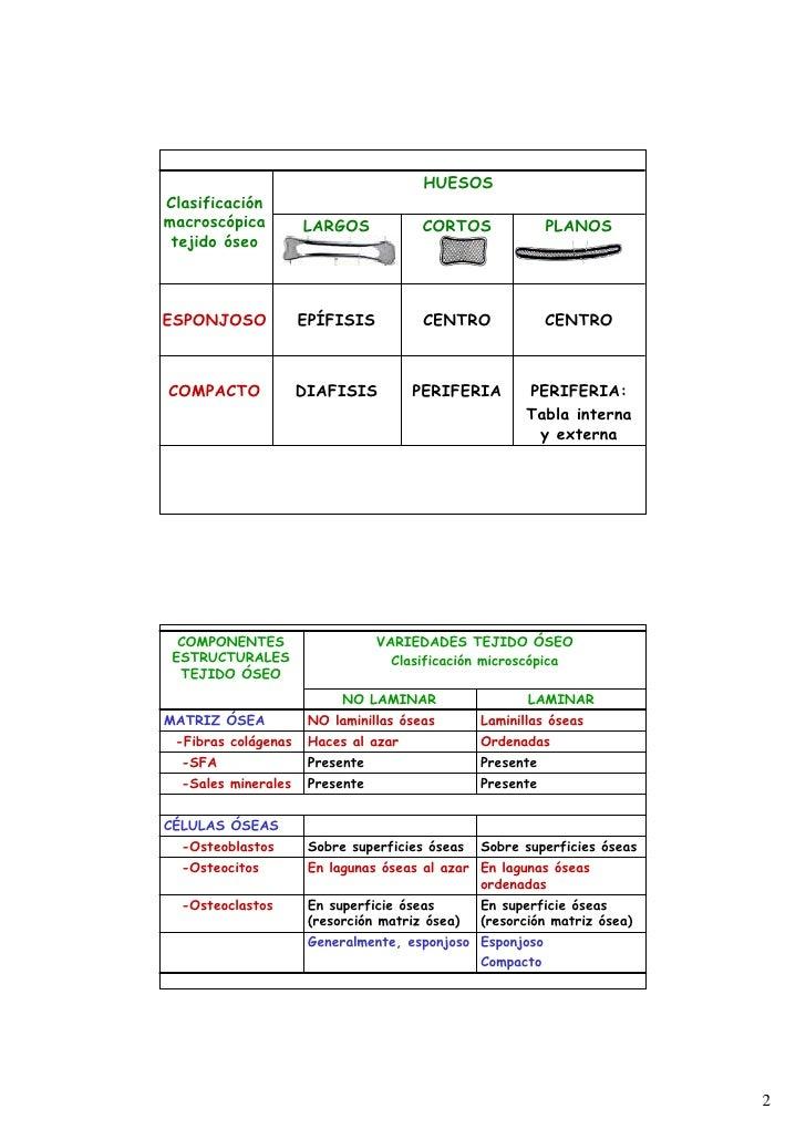 Web tipososeososteogenesis 0910 Slide 2