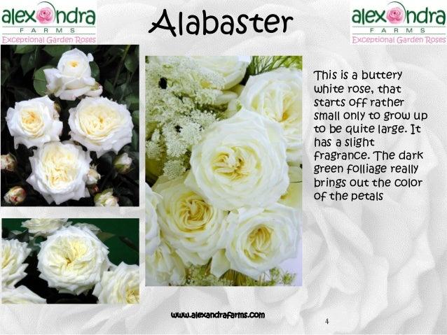 Alabaster ...