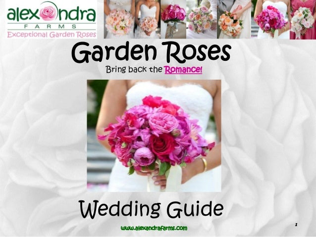 Alexandra farms garden roses wedding guide 2015 bring back the romance alexandrafarms 1 garden roses wedding guide junglespirit