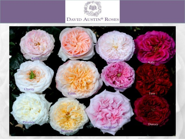 Alexandra Farms Garden Roses Wedding Guide 2015