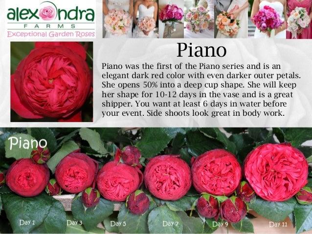 Roses In Garden: Alexandra Farms Garden Roses Wedding Guide 2015