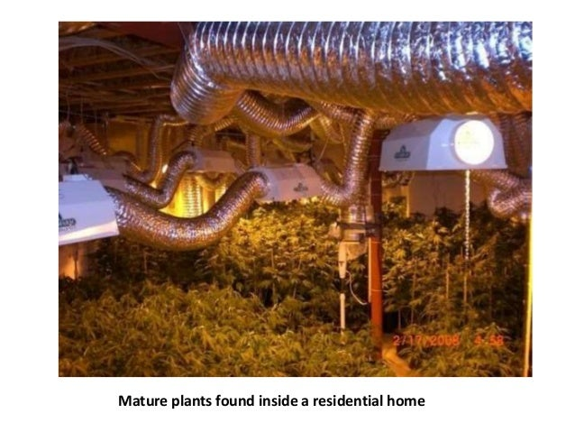 Marijuana And The Practice Of Real Estate Illegal
