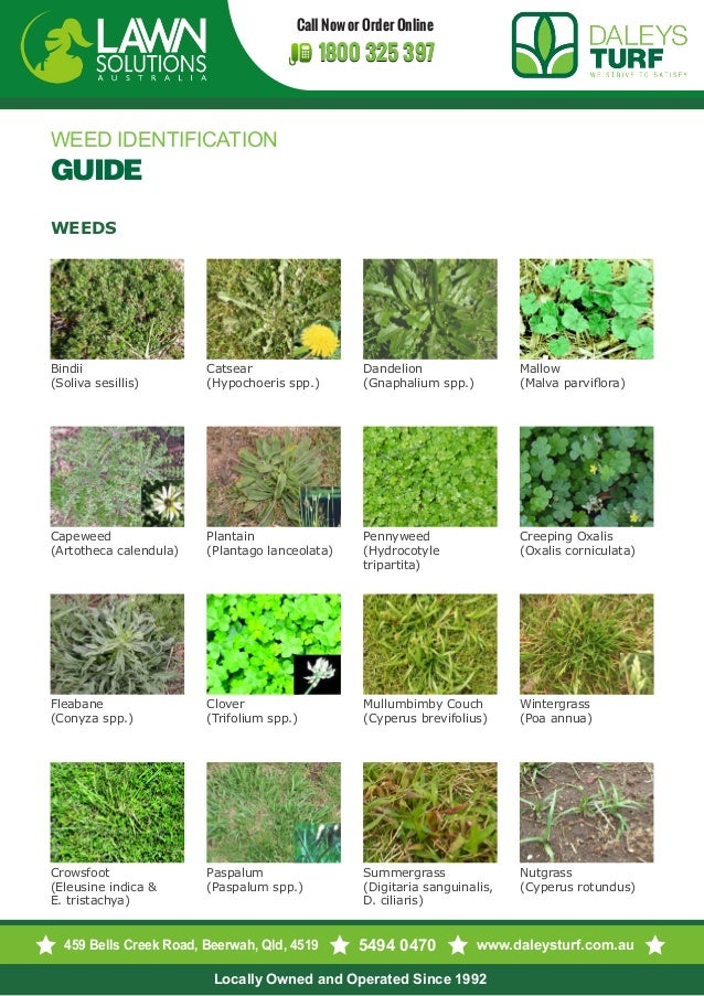 Lawn Weed ID and Management - extension.umd.edu