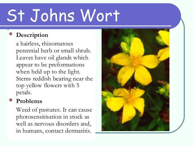 Weed identification st johns wort 19 mightylinksfo