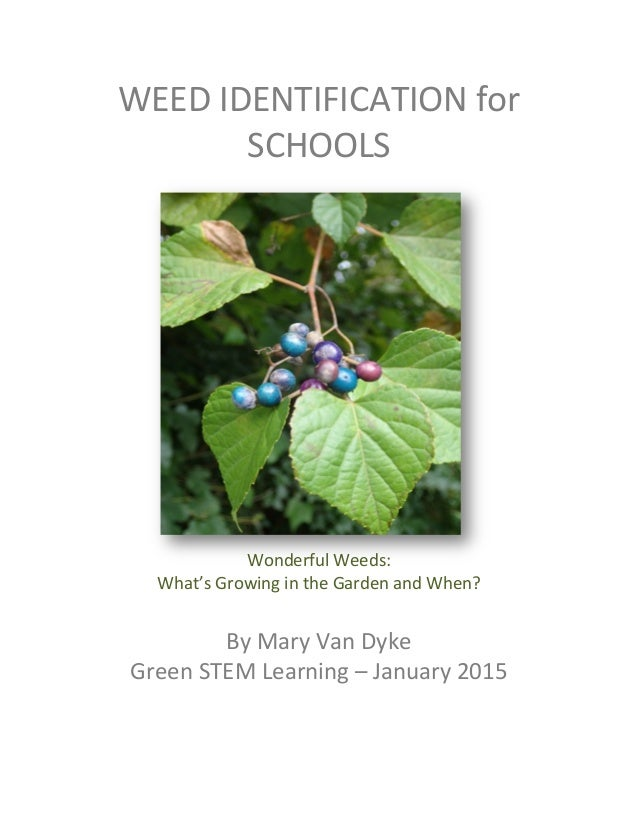 WEED	   IDENTIFICATION	   for	    SCHOOLS	    	    	    	    	    	    	    	    	    	    	    	    	    Wonderful	   Wee...