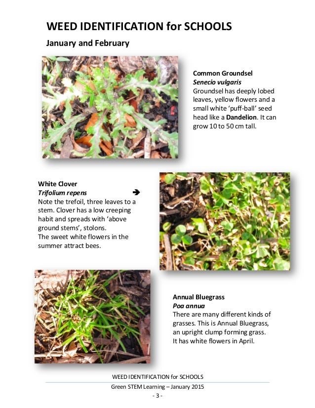 Weed Identification For Schools 2015