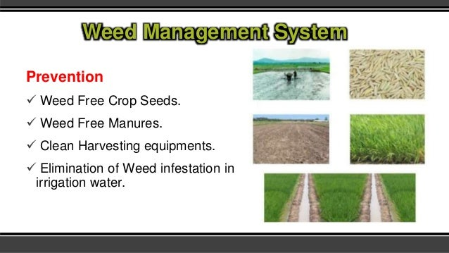 Weed Management Systems In Field Crops