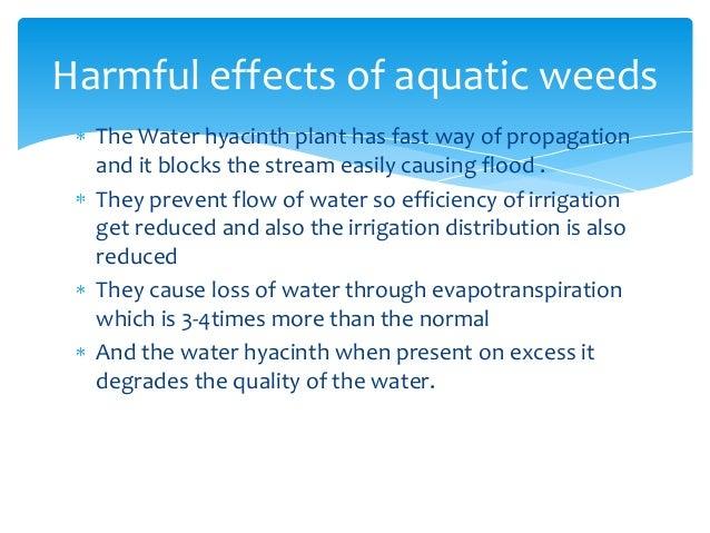 harmful effects of algae pdf
