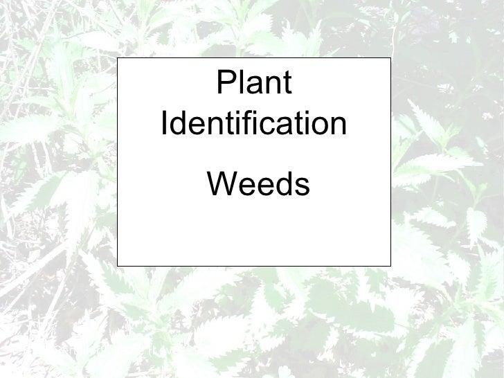 Plant Identification Weeds RHS Cert Horticulture (Level 2)