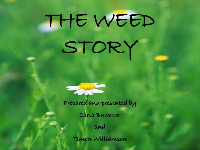 THE WEED STORY Prepared and presented by Carla Bucknor and Timon Williamson