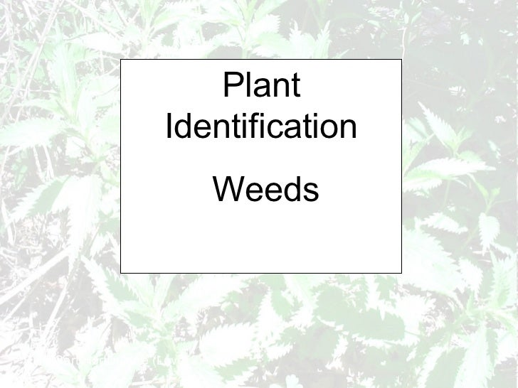 Plant Identification Weeds RHS Cert Horticulture (Level 2)