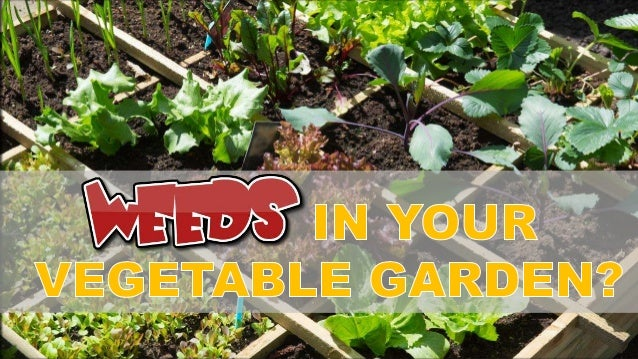 Growing Vegetables During The Summer Can Be A Great Way To Cut Down On  Grocery Costs ...