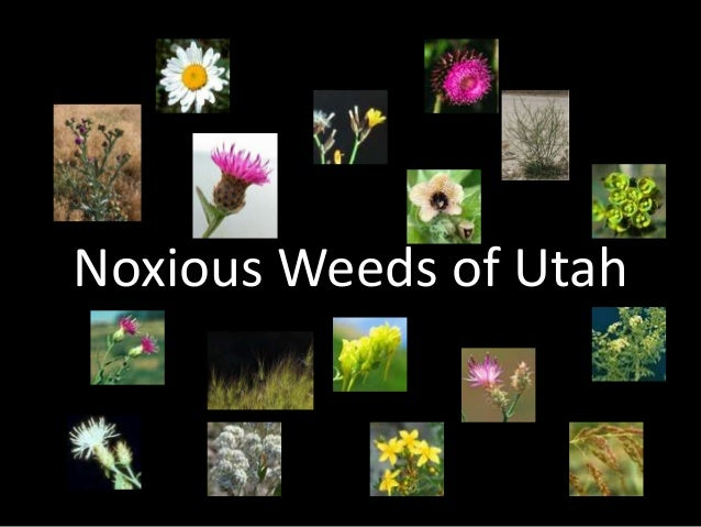 Noxious Weeds of Utah