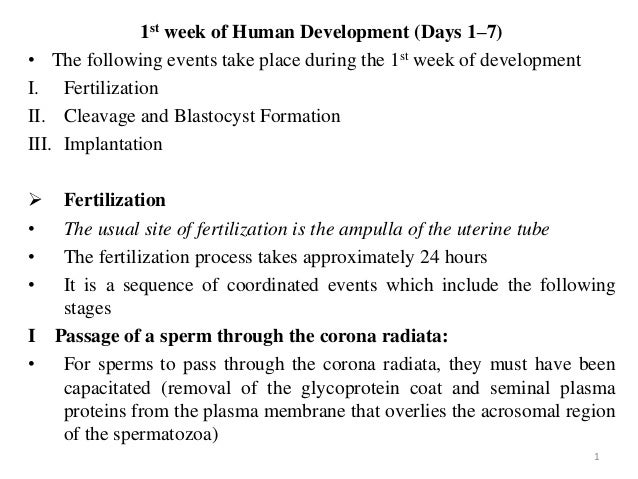 1st week of Human Development (Days 1–7) • The following events take place during the 1st week of development I. Fertiliza...