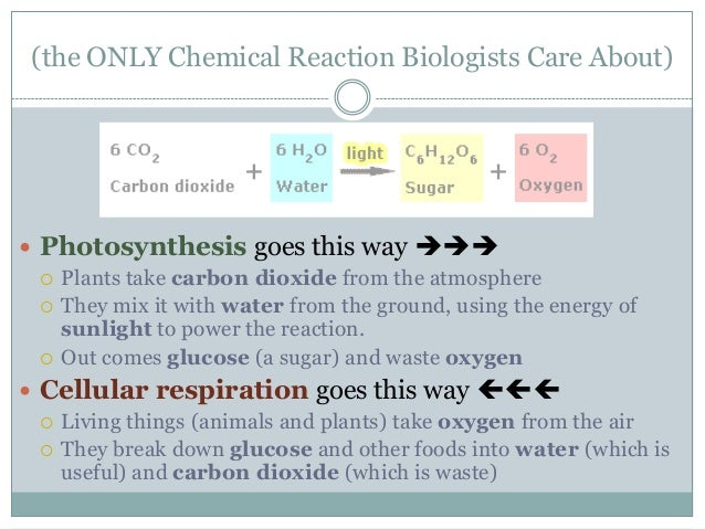 ap biology photosynthesis essay questions answers Introductory biochemistry flowcharts ap biology, molecular biology, school notes, med school, school stuff, flowchart, nursing schools, wgu nursing, school organization.