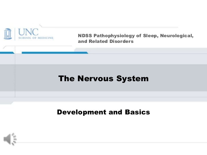 The Nervous System <br />Development and Basics<br />