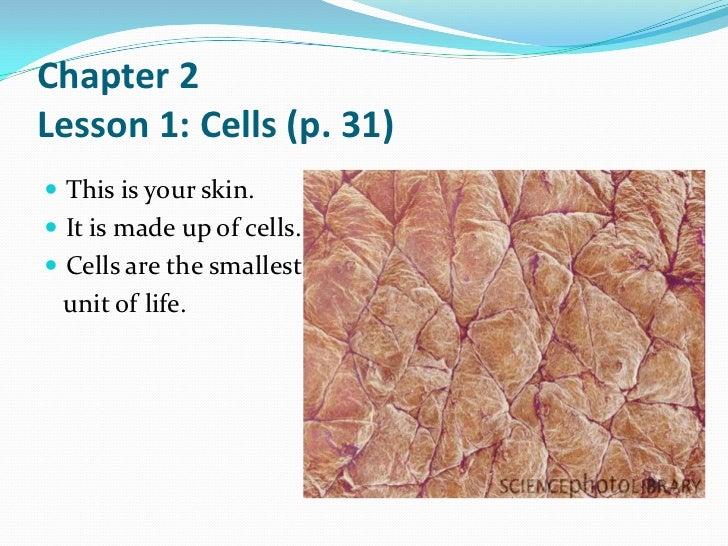 cells - grade 6