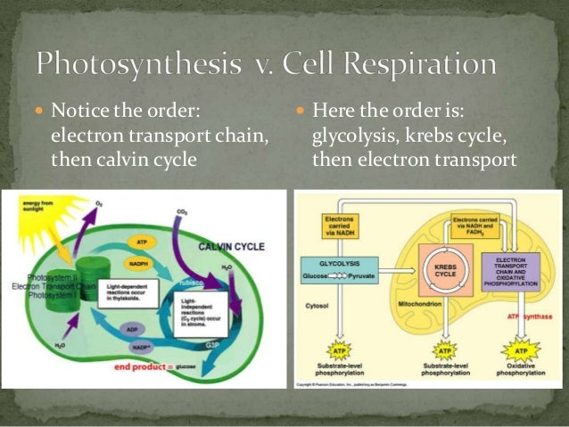 Photosynthesis cellular respiration cycle diagram basic guide ap biology week 3 cell energy rh slideshare net photosynthesis and cellular respiration chart photosynthesis and cellular respiration ccuart Images