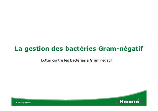 La gestion des bactéries Gram-négatif Lutter contre les bactéries à Gram négatif