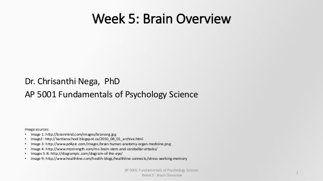 overview of brain psychology notes essay Prejudice, stereotyping and discrimination: theoretical  we offer a broad overview of the field,  nonconscious mind and brain processes, the.