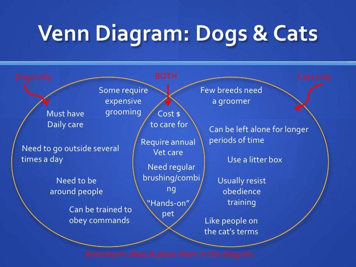 Compare And Contrast Cats And Dogs Essay