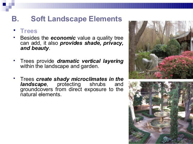 B. Soft Landscape Elements  Trees  Besides the economic value a quality tree can add, it also provides shade, privacy, a...