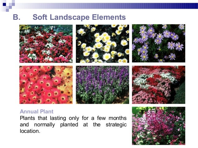 B. Soft Landscape Elements Annual Plant Plants that lasting only for a few months and normally planted at the strategic lo...