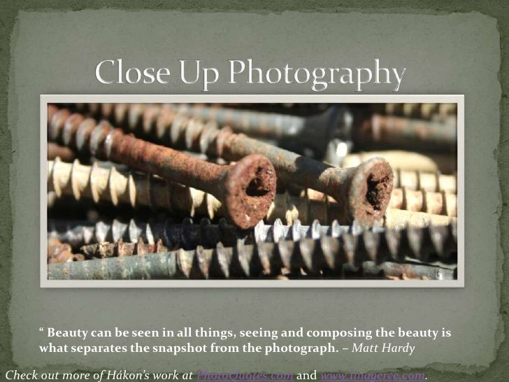 """Close Up Photography<br />"""" Beauty can be seen in all things, seeing and composing the beauty is what separates the snapsh..."""