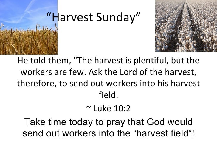 """ Harvest Sunday"" He told them, ""The harvest is plentiful, but the workers are few. Ask the Lord of the harvest, ther..."