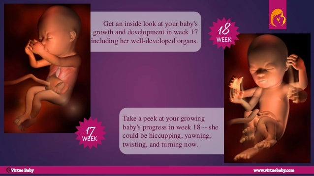 comC; 10. Take a peek at your growing baby's progress in week 18 ...