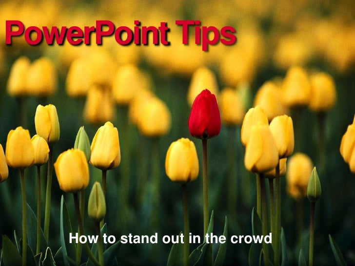 PowerPoint Tips         How to stand out in the crowd