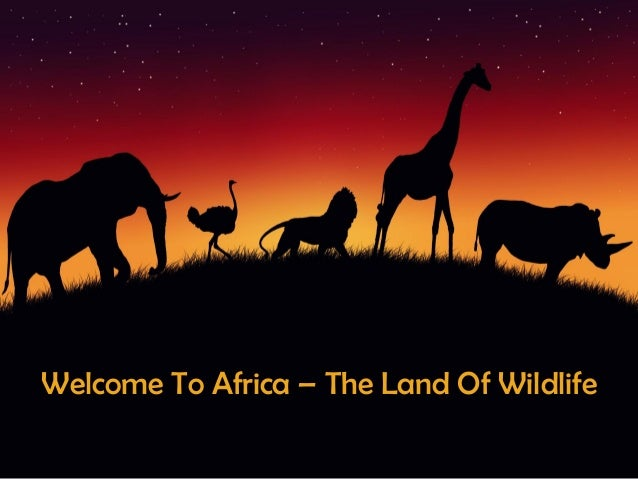 Welcome To Africa The Land Of Wildlife