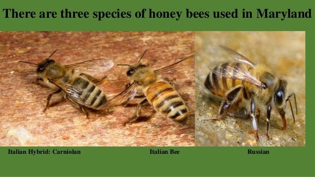 Welcome to Beekeeping, by Robert Borkowski - photo#1