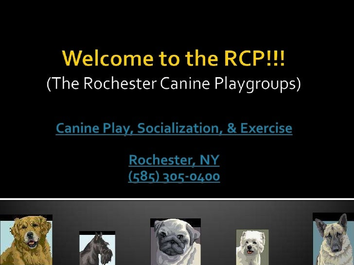 Welcome to the RCP!!!(The Rochester Canine Playgroups)<br />Canine Play, Socialization, & Exercise<br />Rochester, NY<br /...