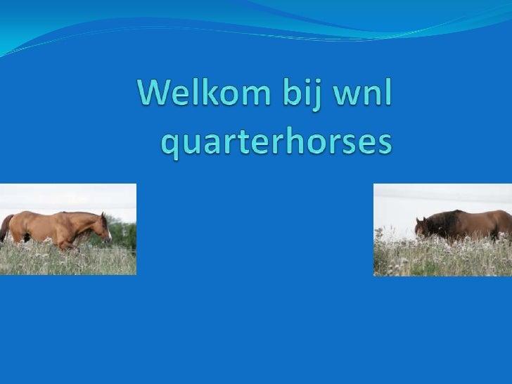 Welkom bij wnlquarterhorses<br />