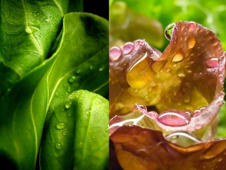 Vitamin B5 (source: Lit-Hung Leung M.D.)✤   Vitamin B5 is needed to create co-enzyme A, which is involved in    thousands ...