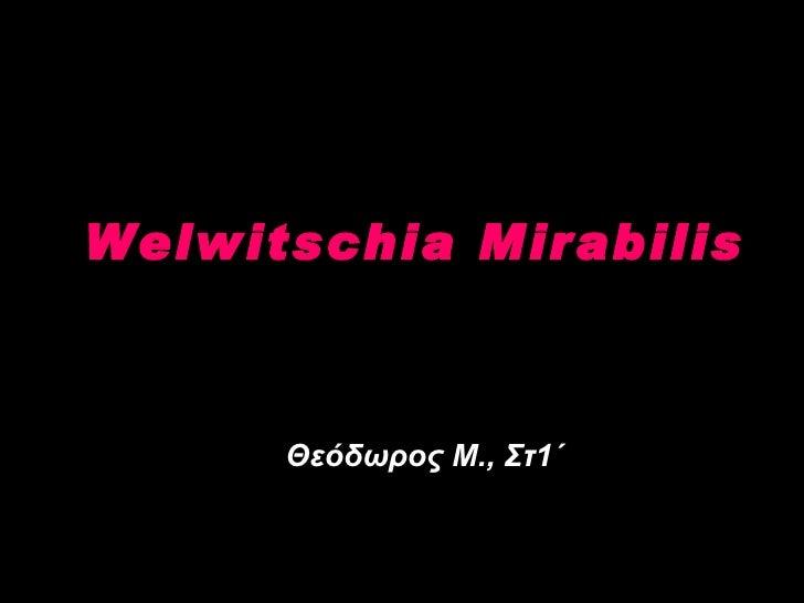 Welwitschia Mirabilis Θεόδωρος Μ., Στ1΄