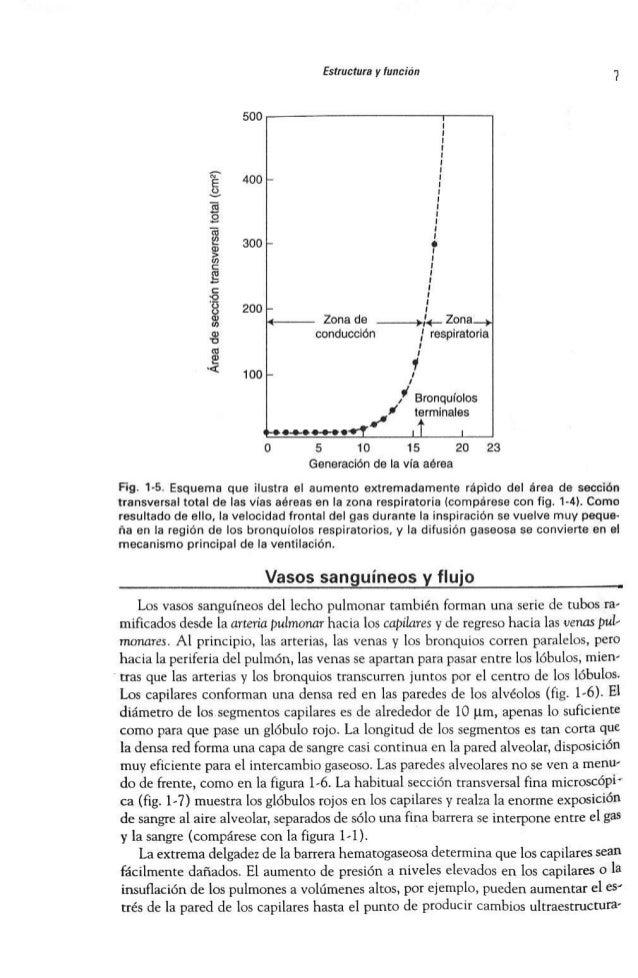 Asombroso Anatomía Y Fisiología Supuesto Esquema Motivo - Anatomía ...