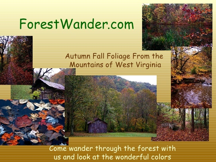 ForestWander.com   Autumn Fall Foliage From the  Mountains of West Virginia Come wander through the forest with us and loo...