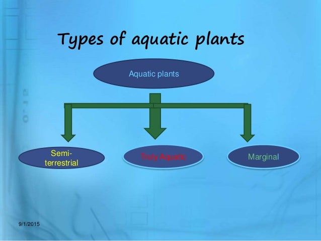 types of aquatic plants aquatic plants semi terrestrial truly aquatic
