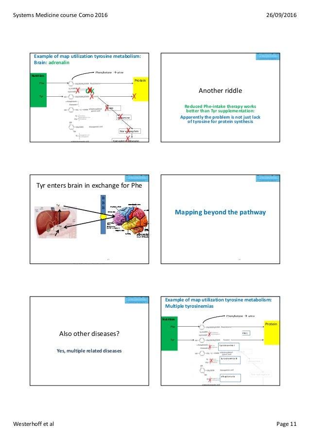 SystemsMedicinecourseComo2016 26/09/2016 Westerhoffetal Page11 Exampleofmaputilizationtyrosinemetabolism: Brai...