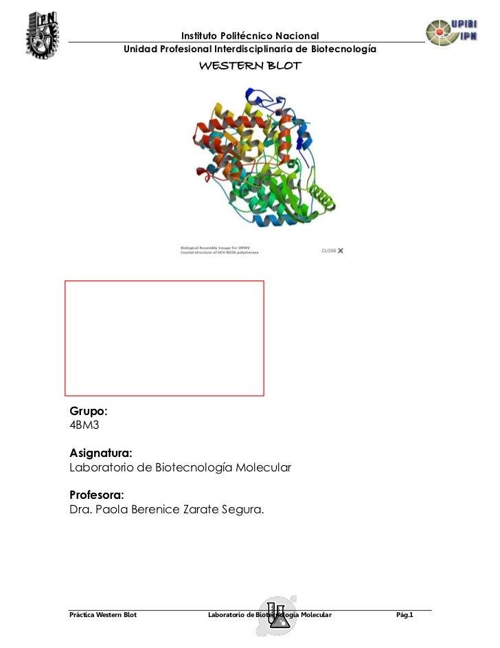 Instituto Politécnico Nacional                Unidad Profesional Interdisciplinaria de Biotecnología                      ...