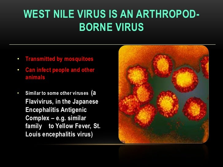 an analysis of the west nile virus and the mosquito transfer rate A definition: the mle is a statistical method used in the calculation ofwest nile virus infection rates of female culex quinquefasciatus mosquitoes in the area for the dallas area, the culex quinquefasciatus species mosquitoes are considered the predominant significant vectors for west nile.